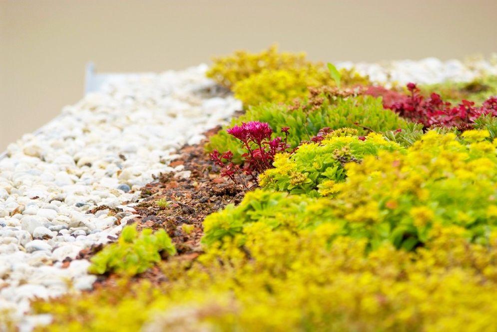 Nahaufnahme Bepflanzung Sukkulenten im Garten © Brunthaler Massivholzhaus