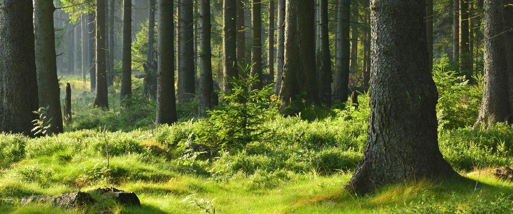 Ökologie und Nachhaltigkeit von BRUNTHALER Holzhäusern