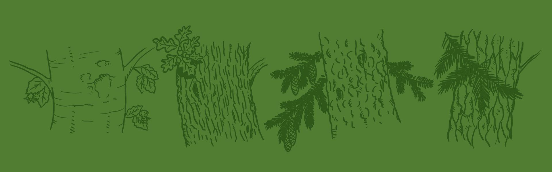 Illustration auf dunkelgrünem Hintergrund mit einer Buche, Eiche, Fichte und Kiefer.