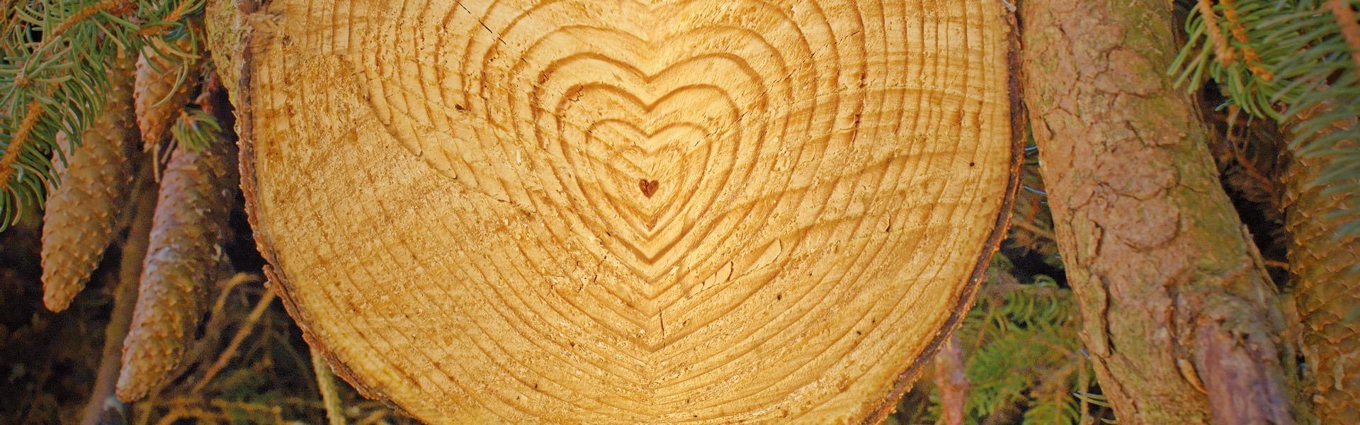 Ein Querschnitt eines Baumstammes, dessen Ringe ein Herz bilden