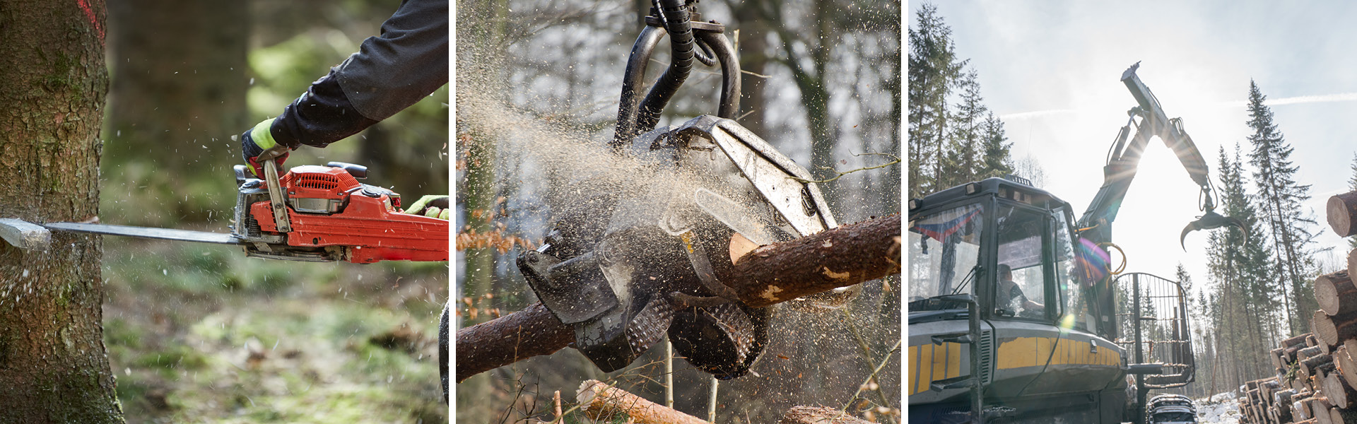 Foto-Collage von verschiedenen Arbeitsschritten in der Baumernte mit der Motorsäge, dem Holzvollernter und einem Tragschlepper.